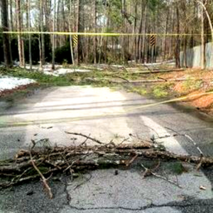 amy's damaged trees and taped off road