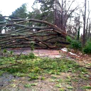 amy's damaged trees over road