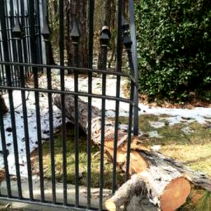 amy's damged trees and gate