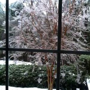 amy's snow crape